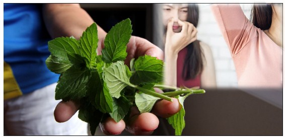 Photo of Benefits Of Basil Leaves For Body Odor