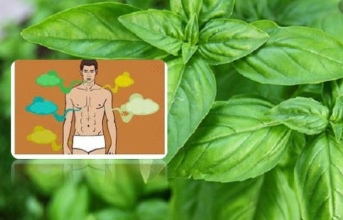 Benefits Of Basil Leaves For Body Odor