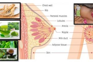 Natural Foods For CANCER, Breast Cancer Cells Guaranteed To Die