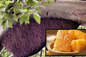 Benefits Of Honey For Health
