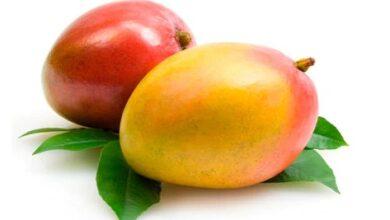 Photo of Benefits of Mango