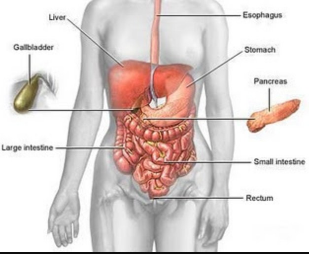 The Benefits Of Healthy Digestion Can Increase Endurance
