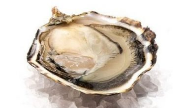 Oysters Can Prevent Anemia, This Is The Explanation
